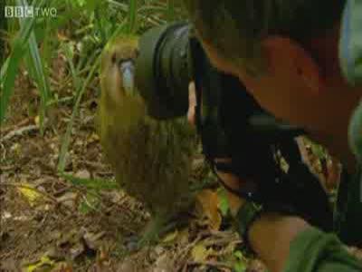 A Parrot Raped Reporter's Head