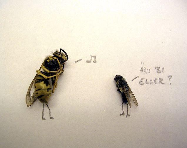 Dead Flies Art (15 pics)