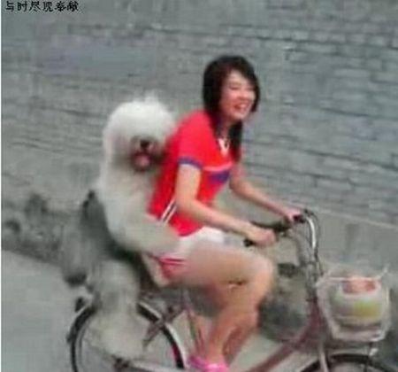 Weird Asia (145 pics)
