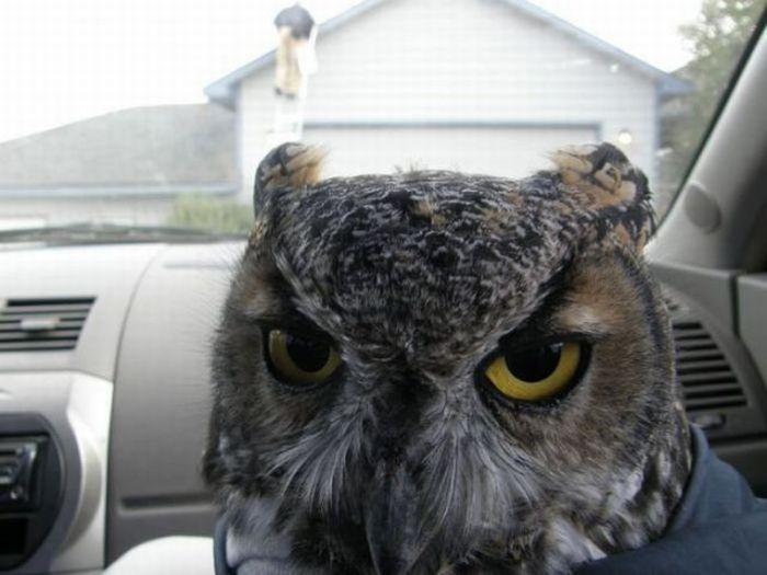 An owl in a box (6 pics)