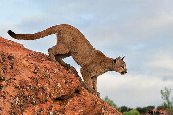 Nice Jump (11 pics)