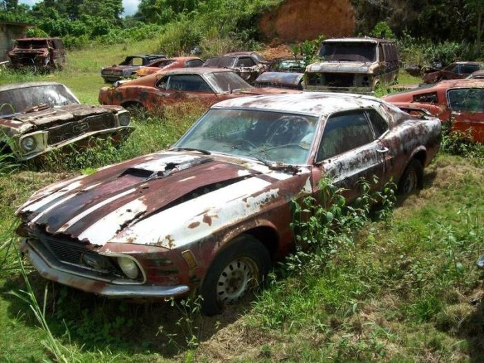 Collection of vintage Mustangs For $ 700,000 (23 pics)