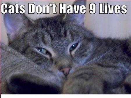 Average Cats (61 pics)