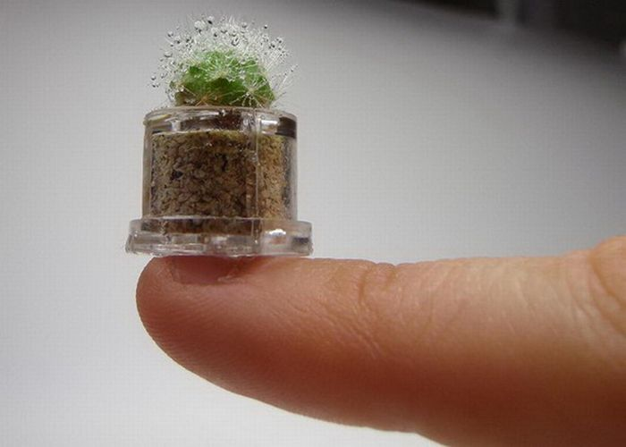 Tiny Versions Of Bigger Things (41 pics)
