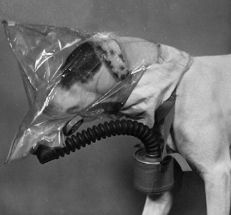 Gas Masks For Dogs (20 pics)