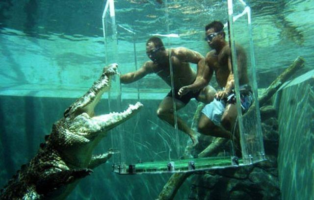 Cage Of Death In Australia (32 pics)