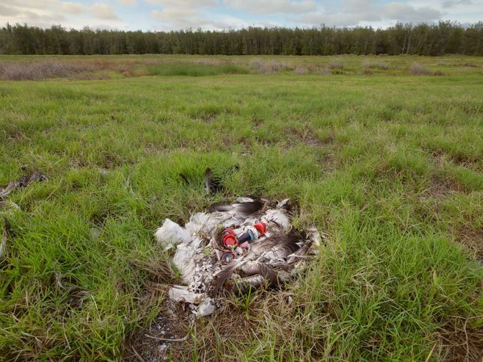 Why birds are dying (30 pics)