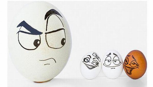 The Secret Life Of Eggs (7 pics)