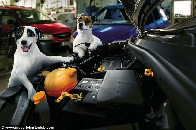 Funny Dogs At A Repair Shop (12 pics)