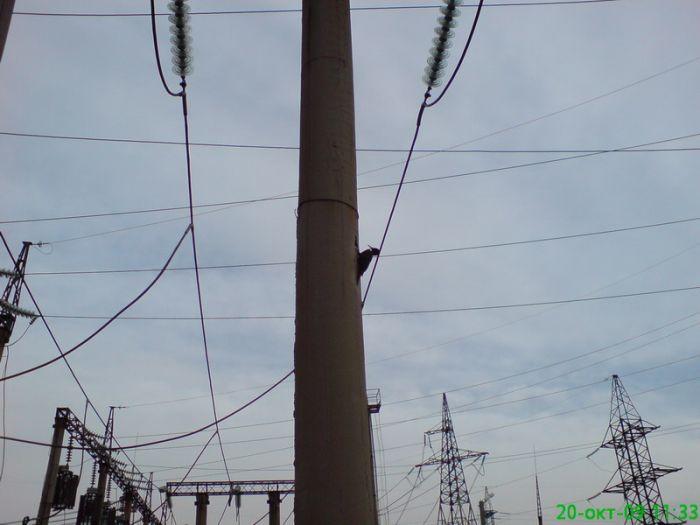 Woodpecker On A Concrete Pole  (3 pics)