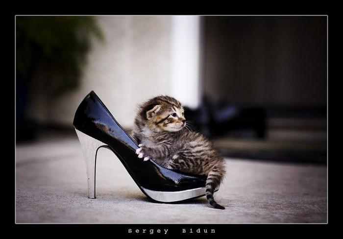 Cute Animals (30 pics)