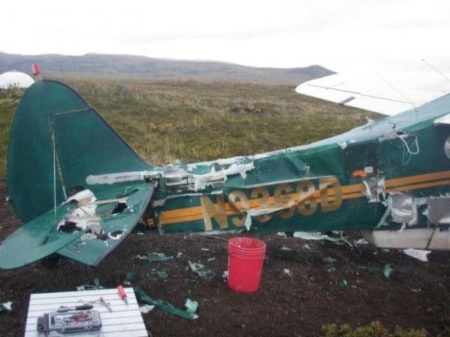Bear VS Plane (6 pics)