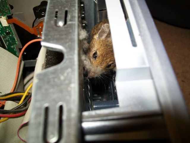 Mouse in PC (3 pics)