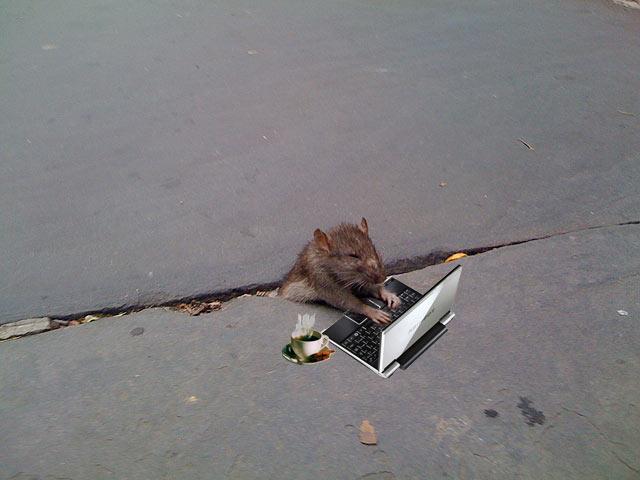 Sad Rat (24 pics)