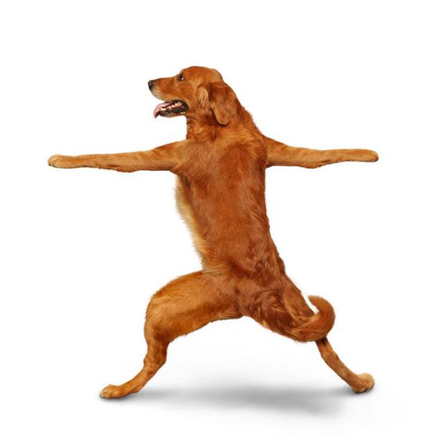 Yoga Dogs Funny Calendar 14 Pics