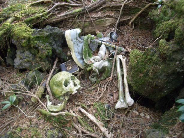 Aokigahara Forest - One Of The Creepiest Places On Earth (19 pics)