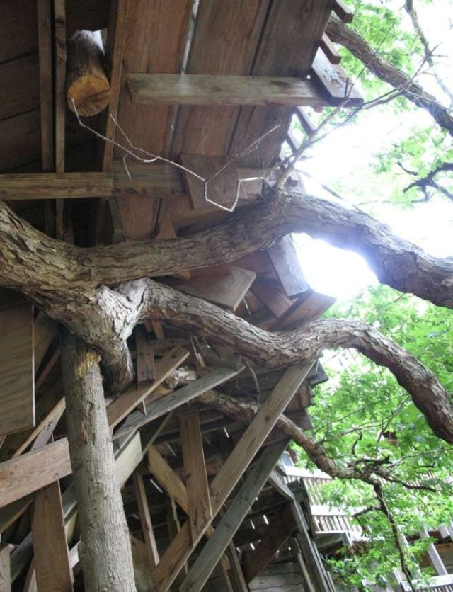 The Worlds Greatest Treehouse (12 pics)