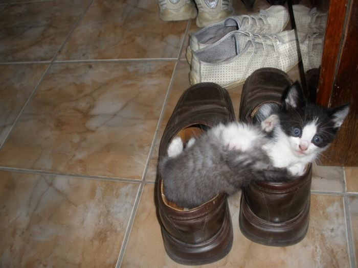 Kittens in the Shoes (8 pics)