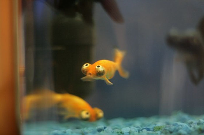 The Funniest Fish in the World (3 pics)