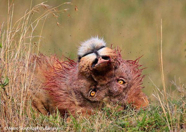 The Winners of Wildlife Photographer 2009 (44 pics)