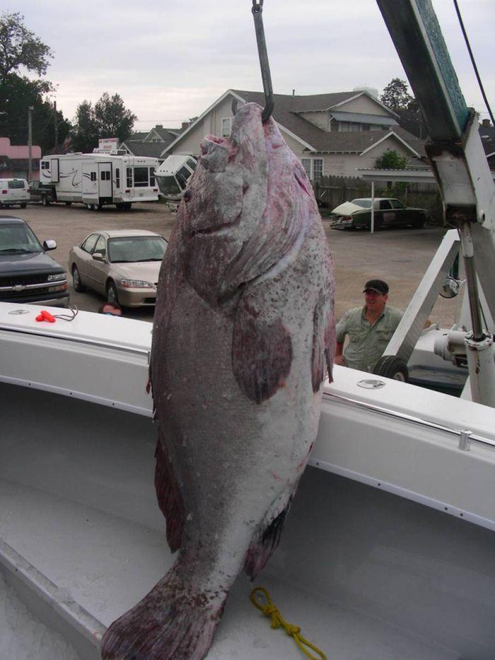 Medical Student Catches 359-Lb Grouper (5 pics)