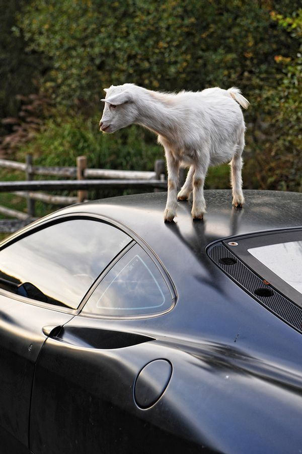 Who Left Those Marks On My Ferrari? (5 pics)