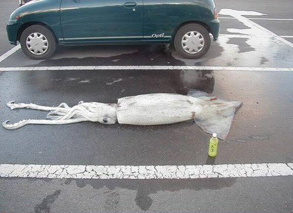 WTF Pictures (76 pics)