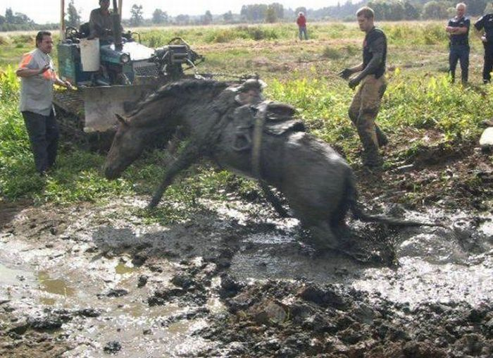 Horse Rescue (4 pics)
