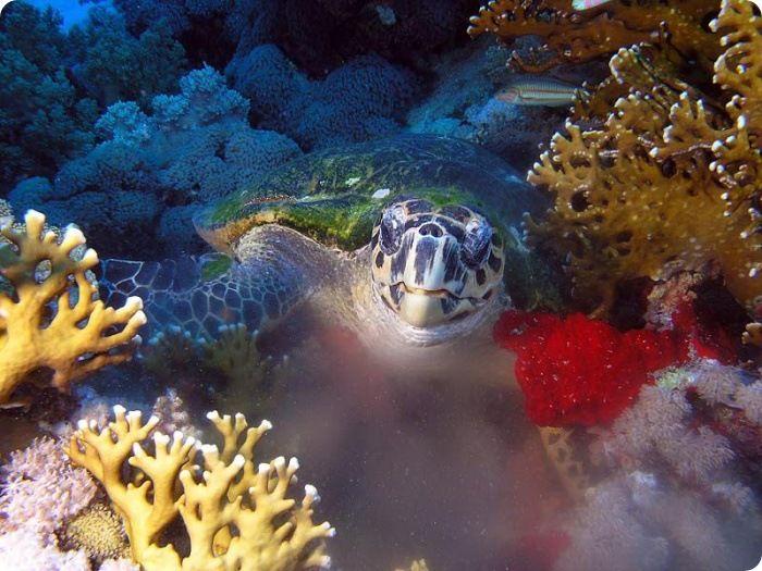 Beautiful Underwater Photos (13 pics)