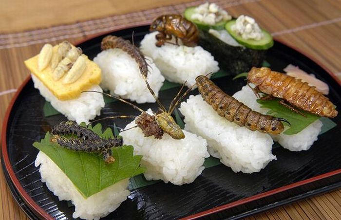Insect Sushi (16 pics)