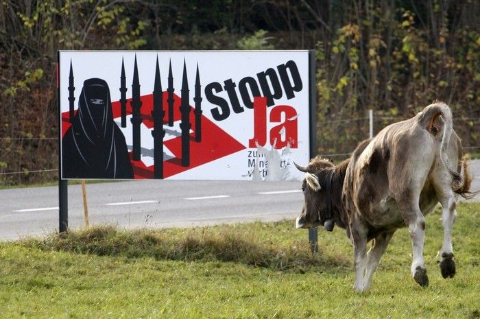 Voting Cow from Switzerland (3 pics)