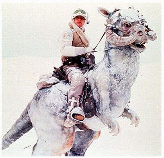 Luke Skywalker on a Tauntaun Costume (6 pics + video)