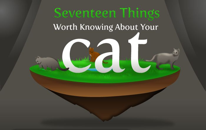 17 Things Worth Knowing About Your Cat (8 pics)