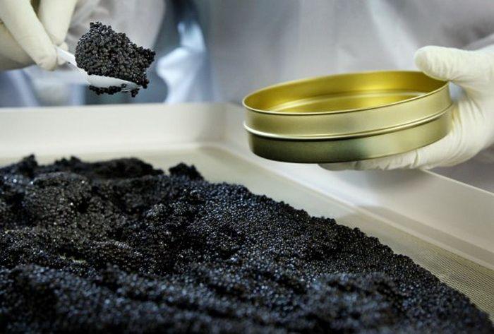 How Black Caviar is Made (24 pics)
