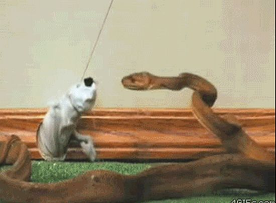 One of the Most Bizarre Gifs I Have Ever Seen
