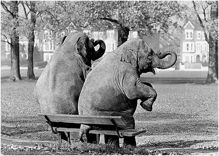 Funny Black and White Photography (20 pics)