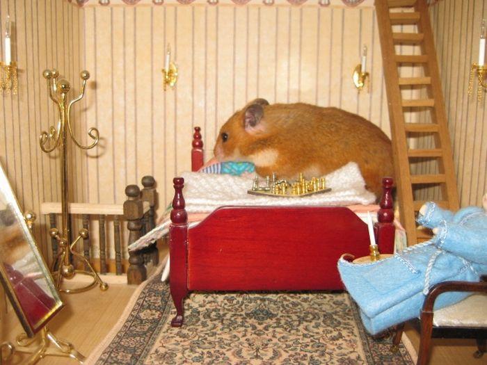 Hamster House (5 pics)