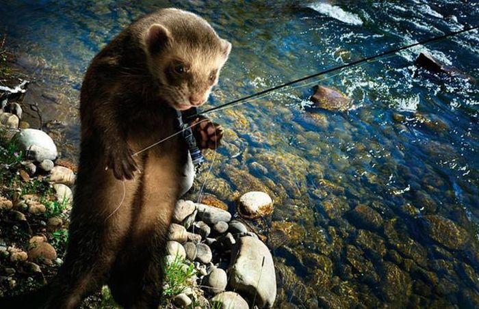 Ferrets go Fishing (13 pics)