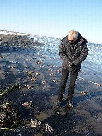 Thousands of starfish were washed out on the Pacific Coast of Russia (6 pics)