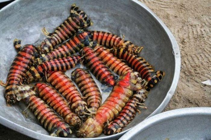 Unusual Shrimps (5 pics)