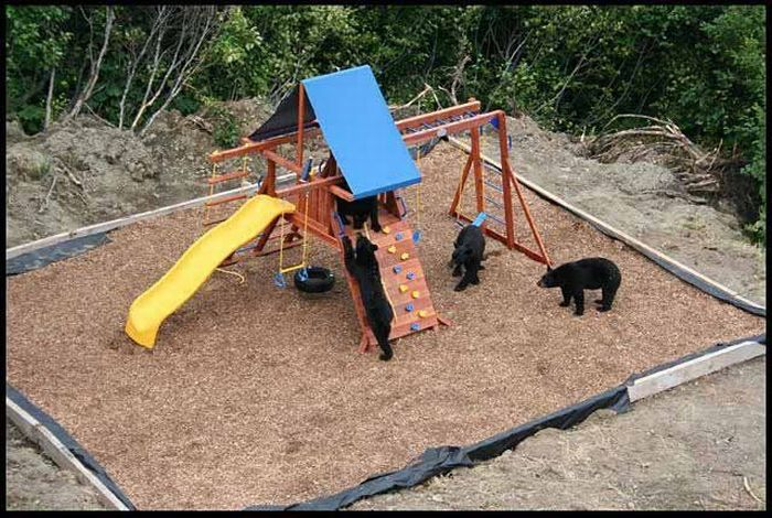 Bears in th Playground (4 pics)