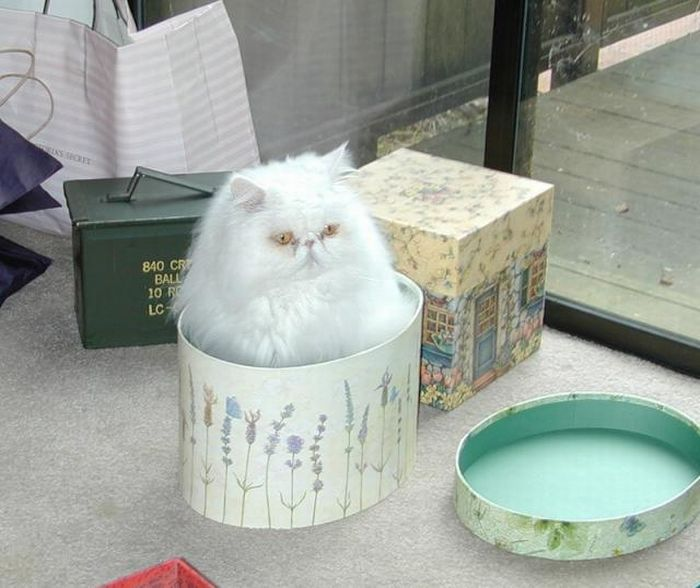 Cats Can Be Found Anywhere (47 pics)