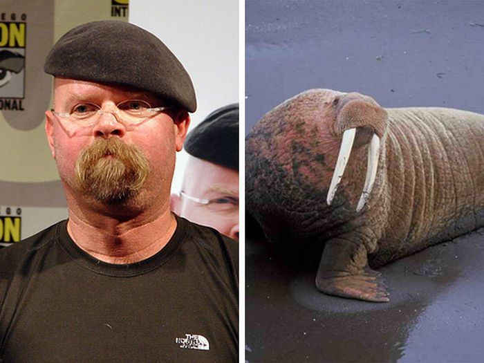 Celebs That Look Like Animals (22 pics)