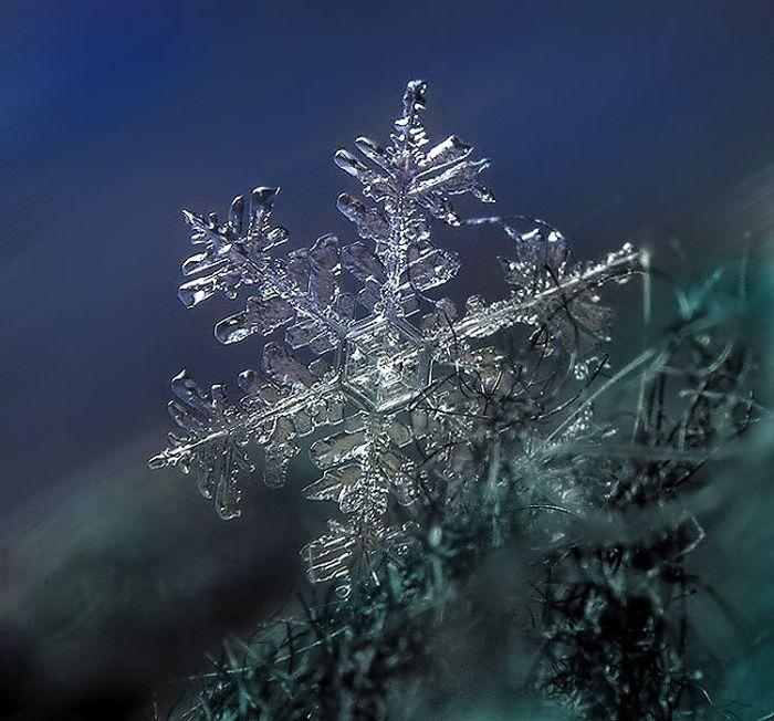 Beautiful Snowflakes (49 pics)