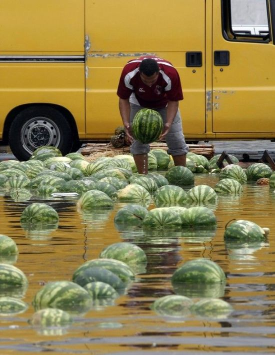 Swimming Watermelons (12 pics)