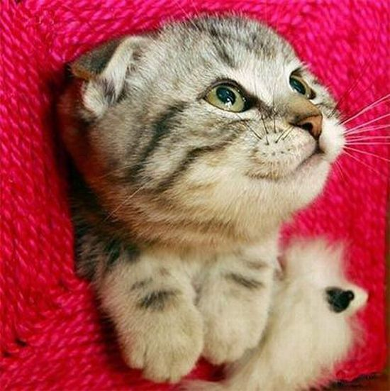 Cute Kitty (13 pics)
