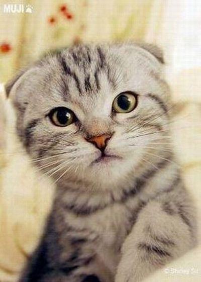 Cute Kitty (13 pics)