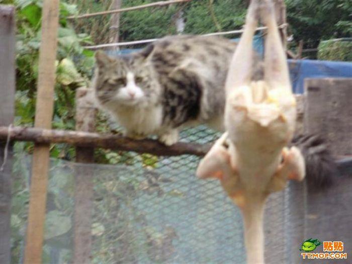 Hungry Cat (9 pics)