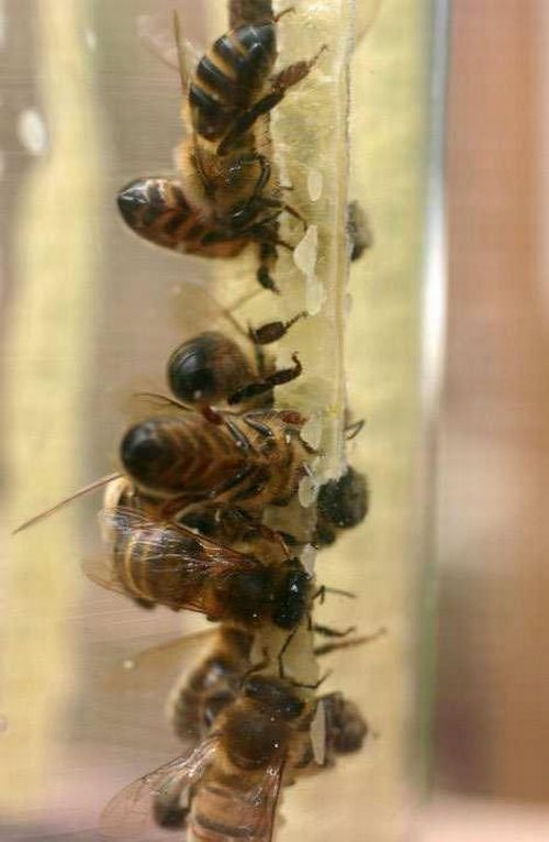 Bees Make Honey in Jar (9 pics)