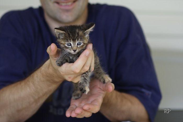 Kittens (111 pics)